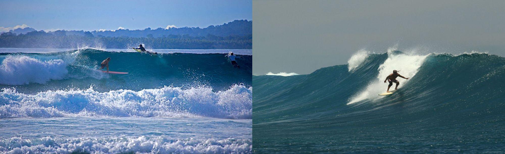 telo surf